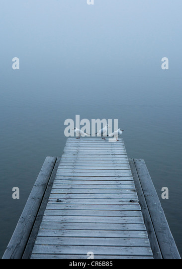 Austria, Seagull on jetty with Mondsee Lake - Stock Image