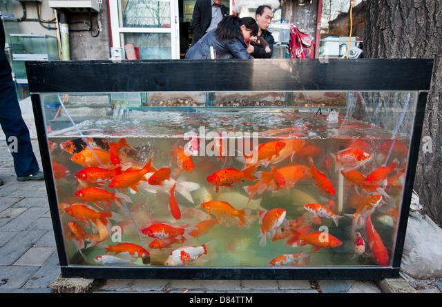 Fish pet store stock photos fish pet store stock images for Fish store reno