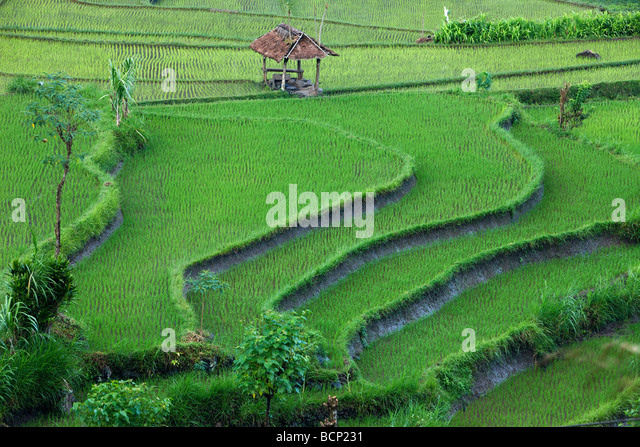 the terraced rice fields, near Tirtagangga, Bali, Indonesia - Stock Image