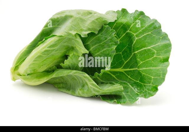 Fresh cabbage shoot on white background - Stock Image