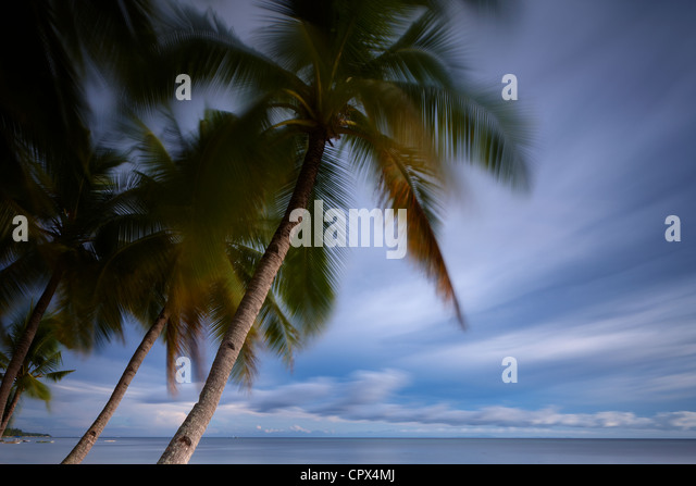 palm trees swaying in the wind, San Juan Beach, Siquijor, The Visayas, Philippines - Stock Image