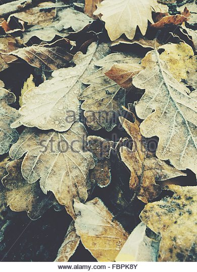 Close-Up Of Dried Leaves - Stock-Bilder