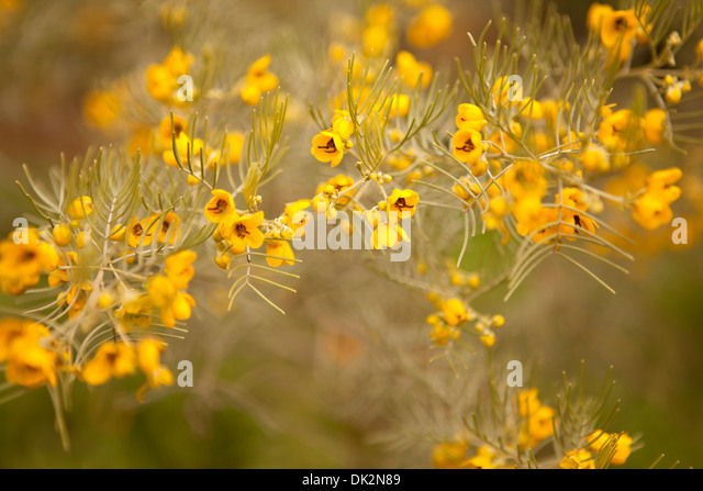 Close up of yellow wildflowers blooming on branch - Stock Image