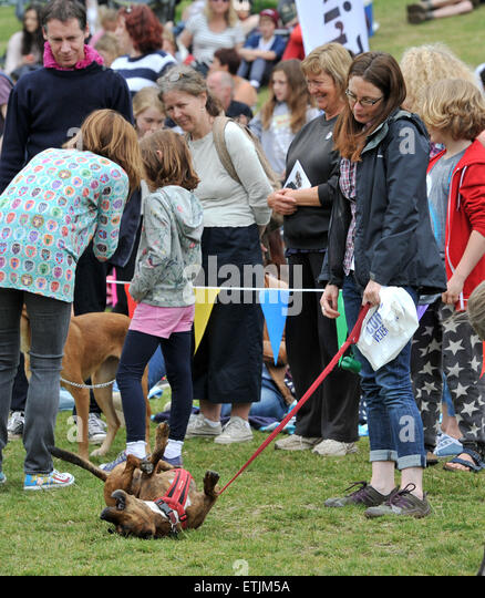 Brighton, UK. 14th June, 2015. This competitor decides to show off at the annual Bark in the Park Dog Show held - Stock Image