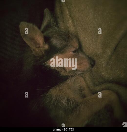 Monochromatic portrait of sleeping dog. - Stock Image