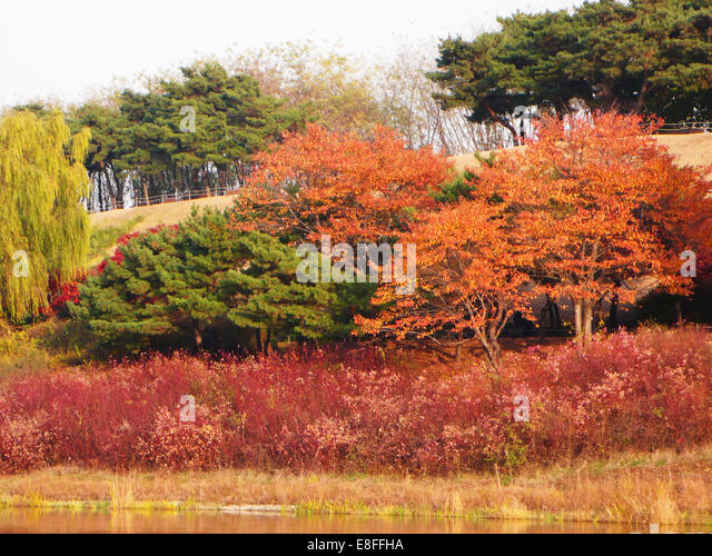 Multi-colored fall foliage in park, Seoul, South Korea - Stock Image