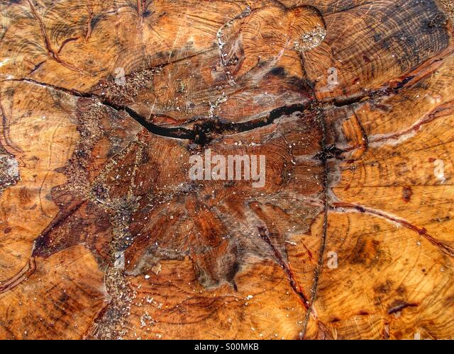 Tree trunk sawn in half showing wood grain and rings - Stock Image