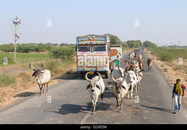 Cows blocking the highway traffic in India, Gujarat, India, Asia - Stock-Bilder