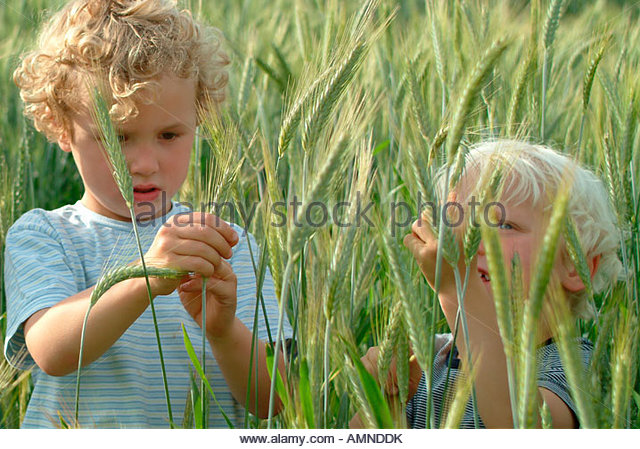 Young boys in a wheat field - Stock Image