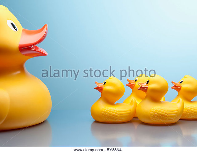 Mother rubber duck and several rubber ducklings - Stock-Bilder
