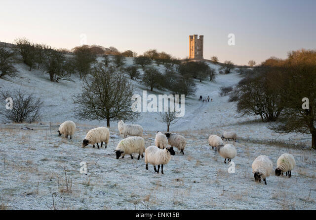 Broadway Tower and sheep in morning frost, Broadway, Cotswolds, Worcestershire, England, United Kingdom, Europe - Stock Image