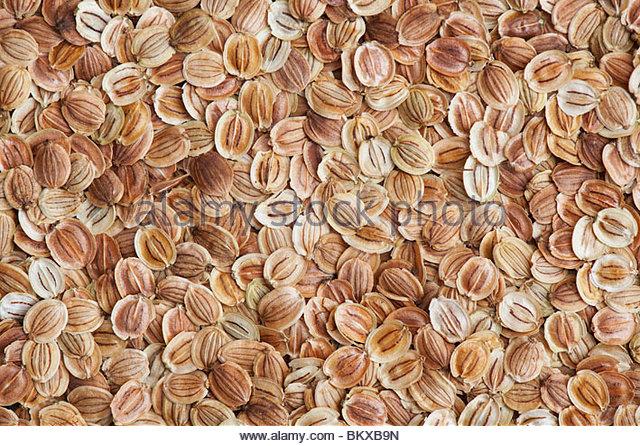 Pastinaca sativa. Parsnip seeds close up - Stock Image