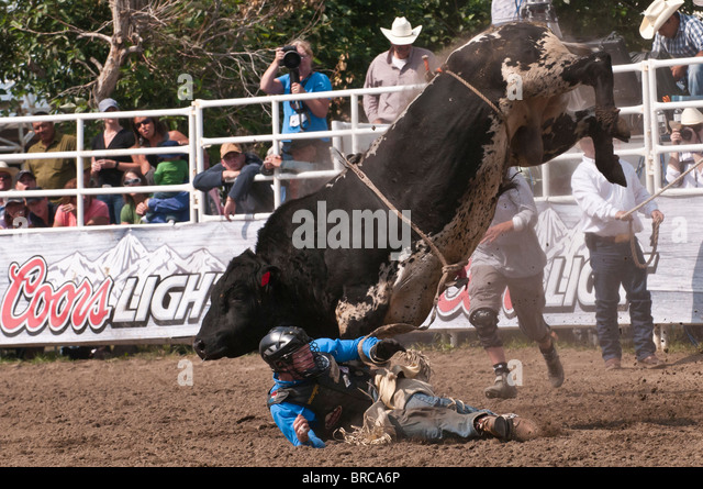 Cowboy being thrown while bull riding, Strathmore Heritage Days, Rodeo, Strathmore, Alberta, Canada - Stock Image