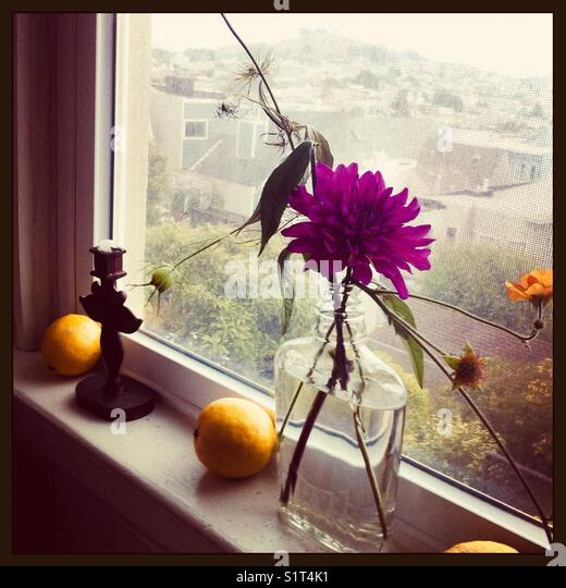 Flowers on window sill - Stock Image