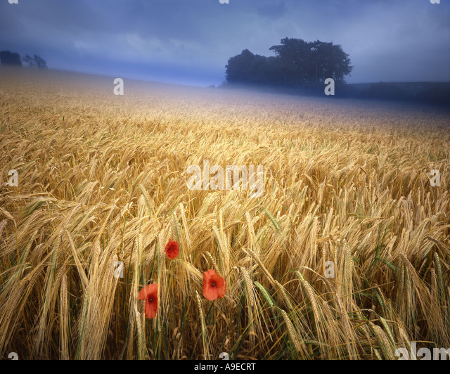 GB - GLOUCESTERSHIRE:  Summertime in the Cotswolds - Stock Image