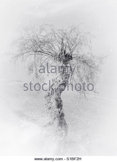 Alone' - Stock Image