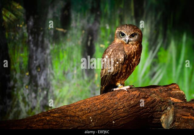 Thailand, Portrait of brown owl - Stock Image