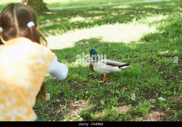 Rear view of a girl feeding duck in park, Munich, Bavaria, Germany - Stock Image