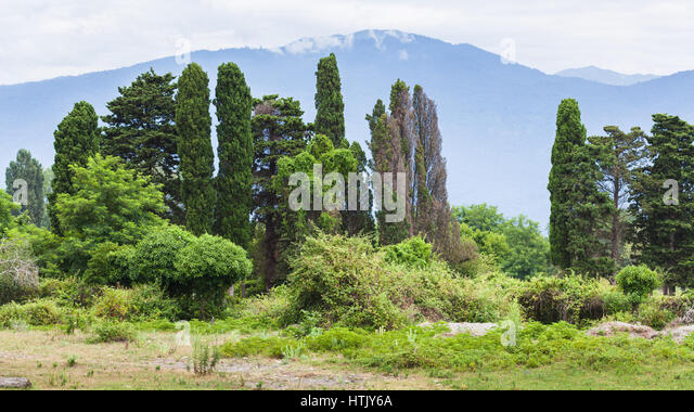 Foothills of the Caucasus in the vicinity of Pitsunda - Stock Image
