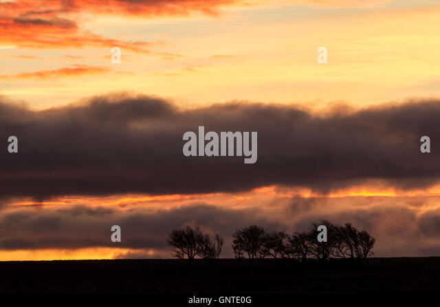 Daybreak over Castleton Rigg, North York Moors national park with a line of trees in silhouett beneath grey clouds - Stock Image