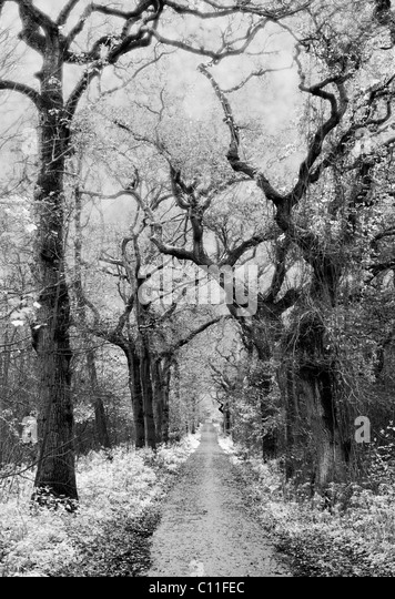 A mysterious forest captured in infrared photography. - Stock Image