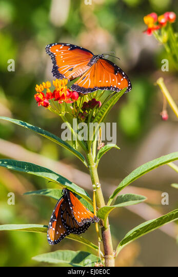Schmetterling Stock Photos & Schmetterling Stock Images ...