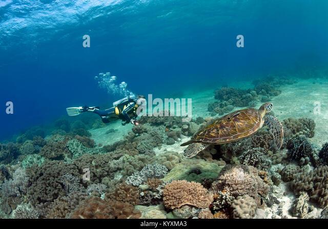 green sea asian personals A 32-year-old kekaha man has been charged after he allegedly killed a  threatened hawaiian green sea turtle on kauai bronson nakaahiki.