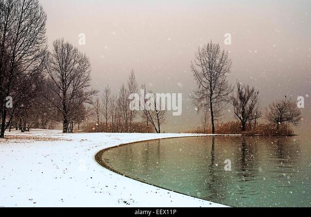 trees in snow - Stock Image