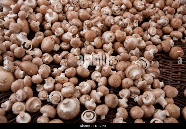 Champignon mushrooms - Stock Image