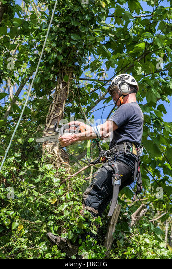 Tree Surgeon Cutting Branches Stock Photos Amp Tree Surgeon
