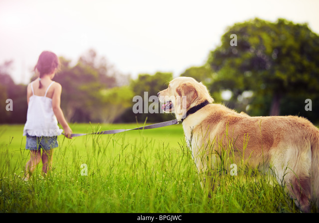 Young girl with golden retriever walking away into sun - Stock Image