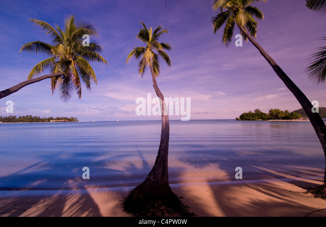 Palm trees on Musket Cove Bay island of Malolo Lailai in the Mamanuca Island group Fiji South Pacific - Stock Image