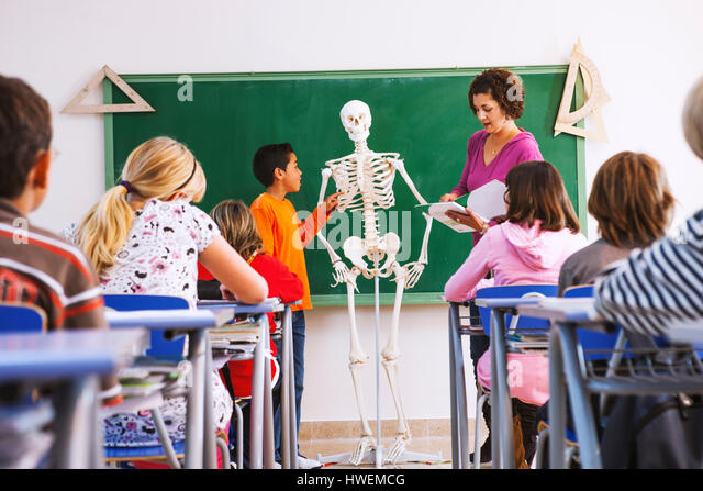 Teacher and boy standing at front of class, looking at model of skeleton - Stock-Bilder
