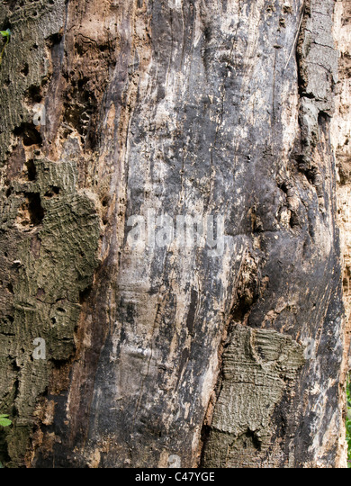 Woodworm uk stock photos woodworm uk stock images alamy for How to treat barn wood for bugs
