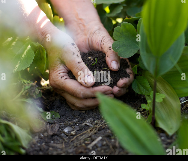 Closeup image of a female hands with soil working in garden - Stock Image