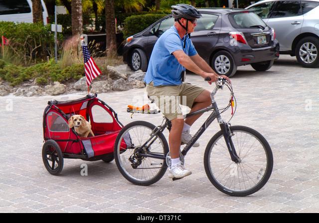 Sanibel Island Florida man bicycle cart carriage dog pet spaniel riding towing - Stock Image