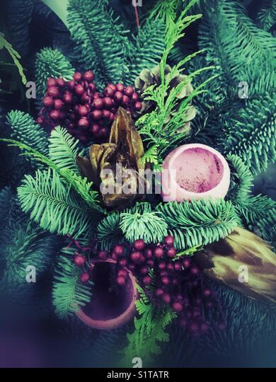Fern and berries - Stock Image