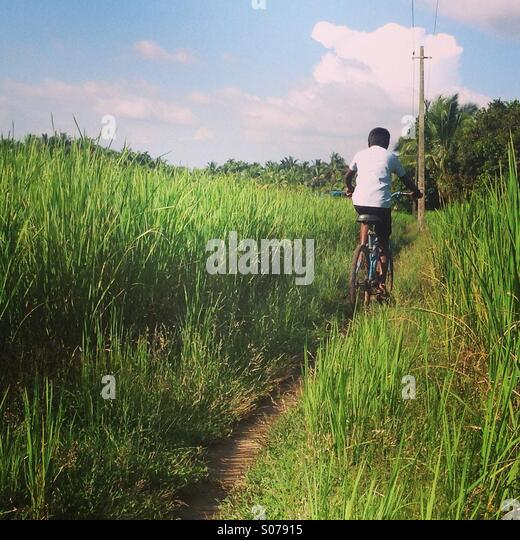 Boy cycling through rice fields in rural Kerala, India - Stock Image