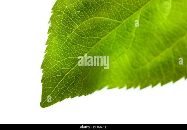 Fresh nature - Stock Image