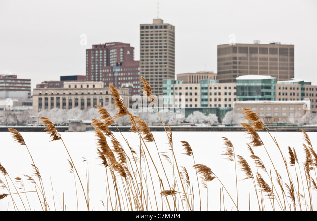 Reeds with city at waterfront in the background, Charles River, Kendall Square, Cambridge, Middlesex County, Massachusetts, - Stock Image