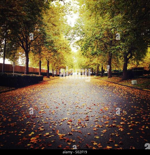 Fall avenue - Stock Image