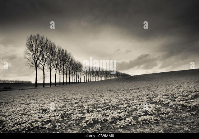 The Somme, France - Stock Image