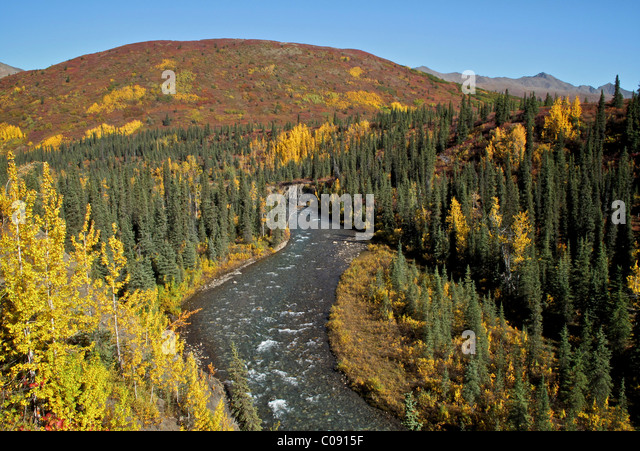 Scenic view of Windy Creek along the trail to Sanctuary River headwaters, Denali National Park, Interior Alaska, - Stock Image