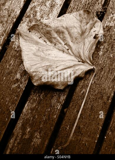 Fragile dried leaf on a table. - Stock Image