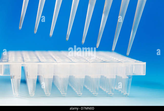 Multi-pipette and multi-well tray - Stock Image