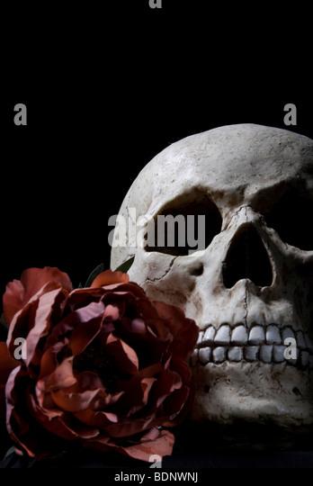 skull and rose - Stock-Bilder