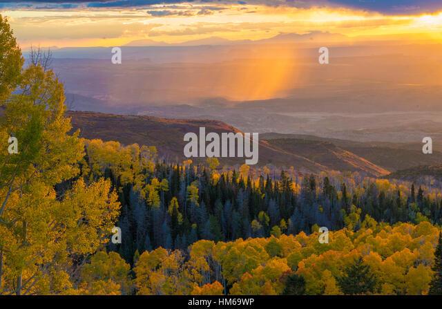 Aspens and rain on the desert, La Sal Mountains, Utah Manti-La Sal National Forest   Quaking aspen,  Populus tremuloides - Stock-Bilder