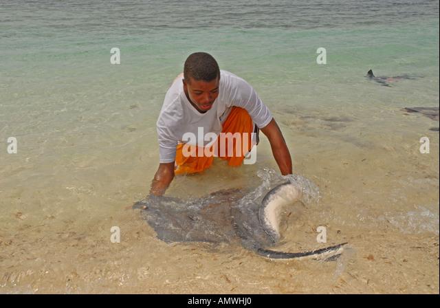 Bahamas southern stingray Pearl Island off New Providence - Stock Image