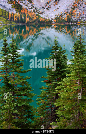 Larch trees and firs at Colchuck Lake in the Alpine Lakes wilderness of Washington state - Stock-Bilder