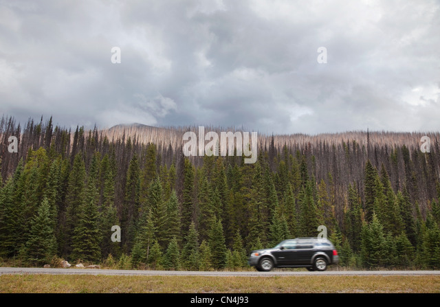 Car on road passing forest, British Columbia, Canada - Stock Image